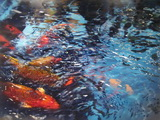 Koi Shimmer LF resin, 36 by 48, sf